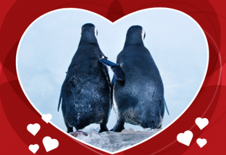 For the Love of Penguins